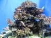 01-aquarium