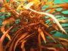 03-aquarium